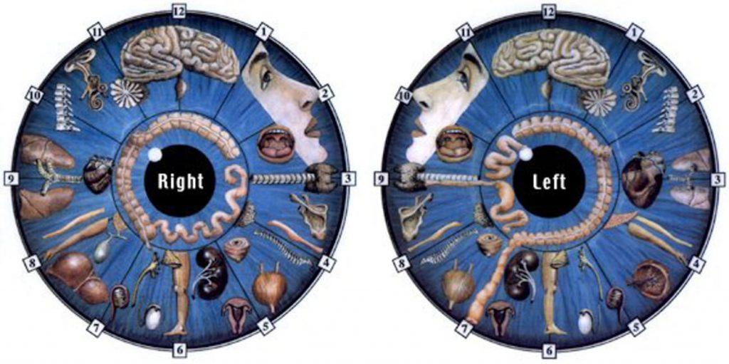 iridology chart how to read