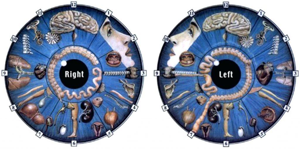 iridology chart free