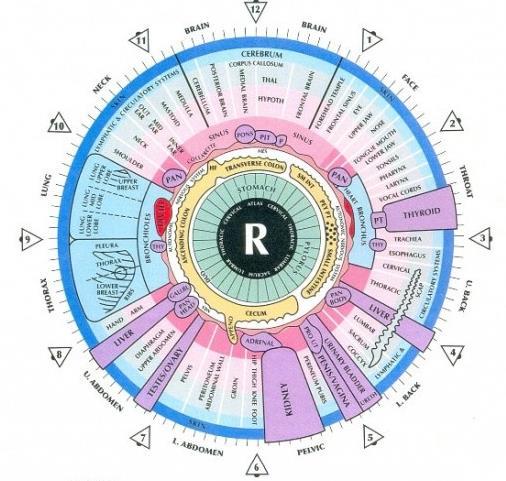 iridology chart right eye
