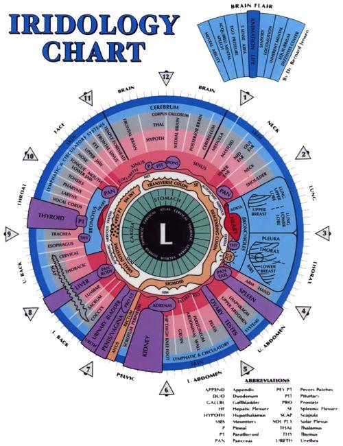 Left iridology eye chart