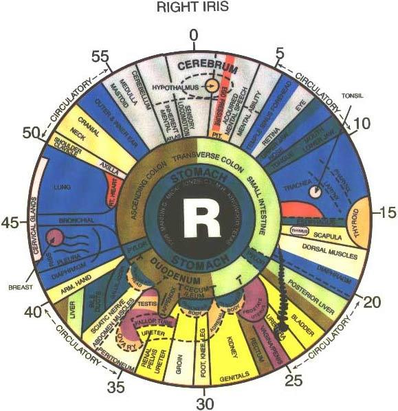 iridology eye chart right