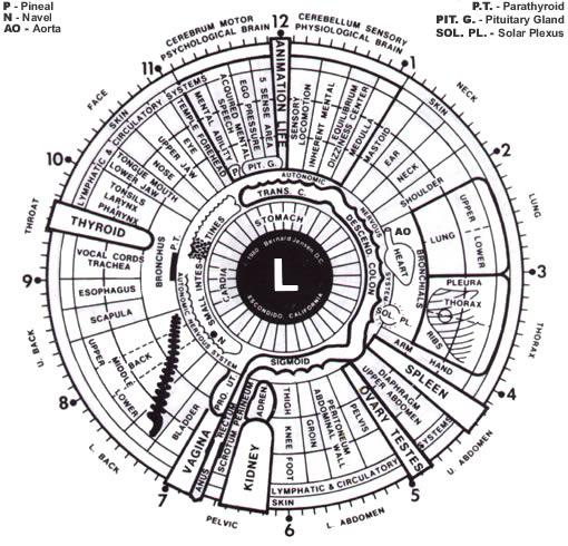 left eye iridology chart